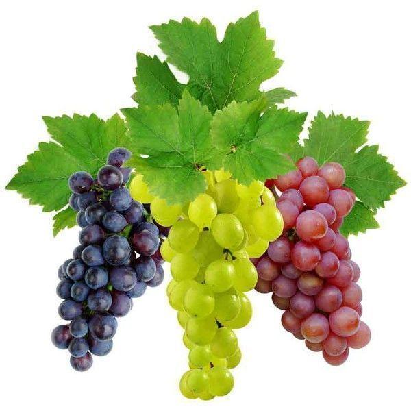 виноград Легран